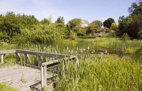 Inveresk Lodge Ponds